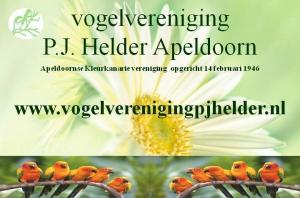 Jubilarissen en oud foto's P.J.Helder